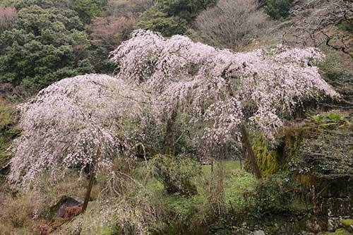 英彦山の花ごよみ